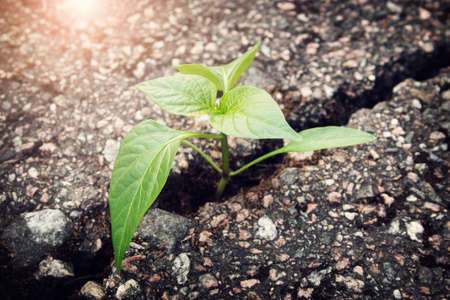 아스팔트에 균열에서 성장하는 녹색 식물