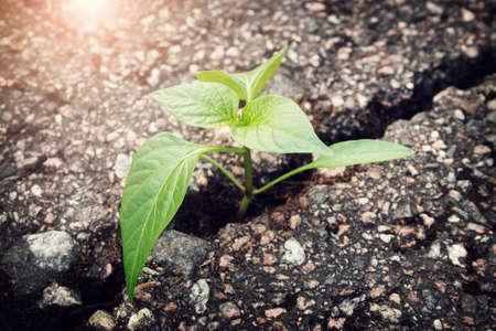 groene plant groeit uit barst in asfalt Stockfoto