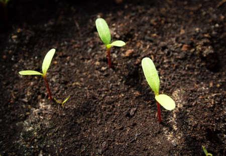 soil conservation: New flower seedlings growing in black soil
