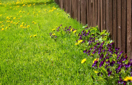 Flowers on a lawn near an old wooden fence Stock Photo