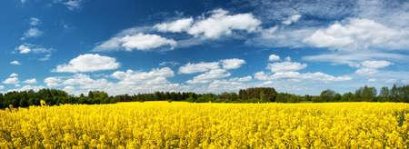 黄色の菜種フィールドのパノラマが beautiul 空