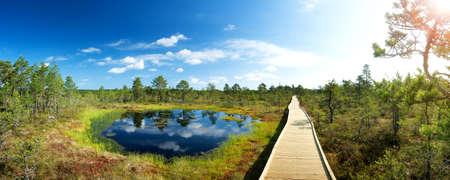 turba: Pantanos Viru en el parque nacional de Lahemaa en Estonia