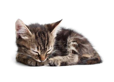 gestreifte Kätzchen schlafen isoliert auf weißem Hintergrund
