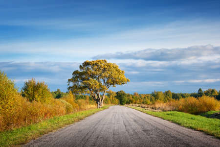single lane road: Elm tree on the road side in autumn