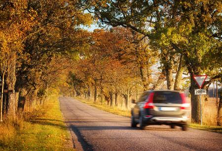 paisaje rural: carretera de asfalto de edad con bellos �rboles a los lados en oto�o