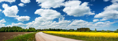 Asphalt road near a field with beautiful rapeseed flowers Stock Photo