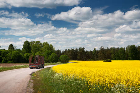 sunny season: Asphalt road near a field with a truck
