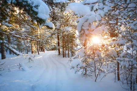 snowscape: small path among trees covered with snow in the forest Stock Photo