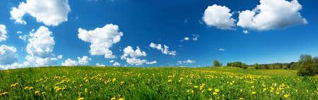 Champ vert avec des pissenlits jaunes et ciel bleu