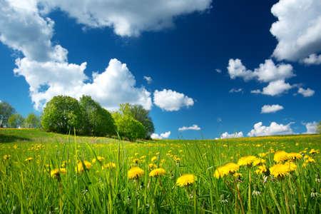 Veld met gele paardebloemen en de blauwe hemel Stockfoto