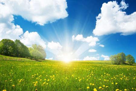 Pole z żółtym dandelions i błękitne niebo