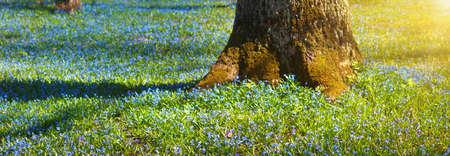 fiori di campo: visualizzare di fiori di primavera nel parco. Bella mattina con il sole