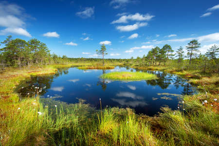 bogs: Viru bogs at Lahemaa national park in summer
