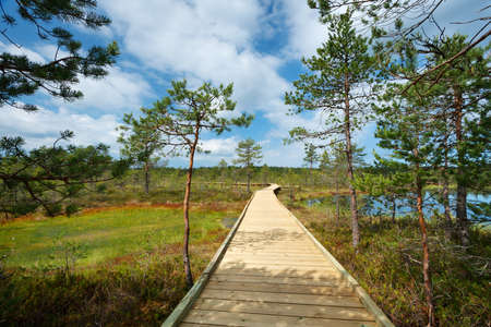 bogs: Viru bogs at Lahemaa national park in summer. Wooden path for hiking in sunny day