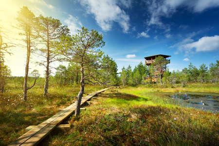 ヴィル湿原夏のラヘマー国立公園で。晴れた日のハイキングのための木製のパス 写真素材