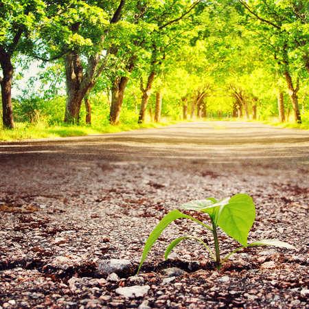 groene plant groeit uit barst in asfalt in de zomer