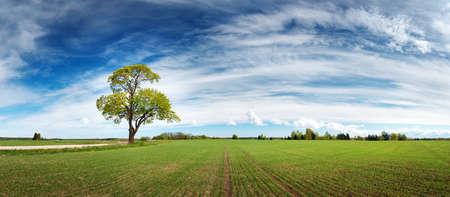 Mooie eenzame boom in het voorjaar op pature veld