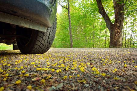 Car on asphalt road on spring day at park