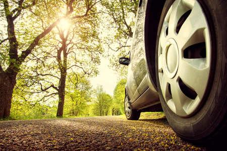 Auto su strada asfaltata in giorno di primavera al parco Archivio Fotografico - 61105374