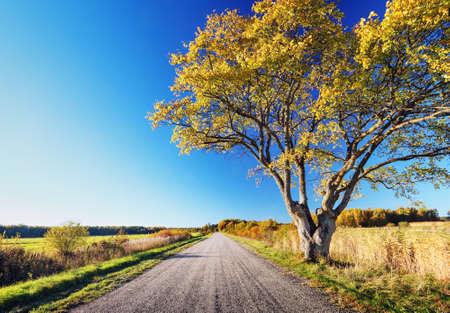 elm: Elm tree on the road side in autumn. Car on asphalt road in october