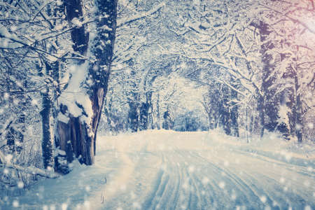 woodland scenery: snow in winter on the road through alley with beautiful sunlight