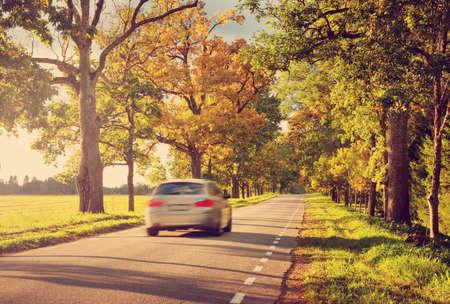 Carretera de asfalto de edad con bellos árboles a los lados en otoño Foto de archivo - 63246286