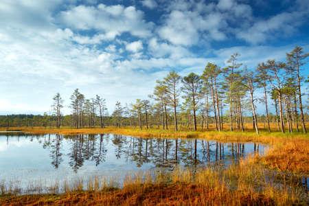 Viru bogs at Lahemaa national park in autumn