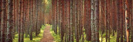 Lahemaa park narodowy las w Wrześniu. Las sosnowy we wczesnych godzinach porannych ze ścieżką idącą throuhg