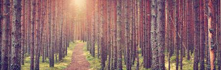 Lahemaa Nationalpark Wald im September. Kiefer Wald in den frühen Morgenstunden mit Weg gehen throuhg