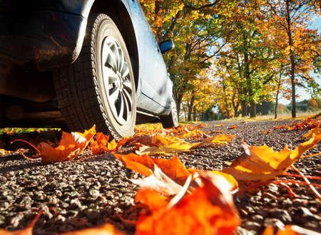 Autumn: Coche en el camino de asfalto en autumnr día en el parque Foto de archivo