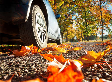 Samochód na drodze asfaltowej na autumnr dzień w parku