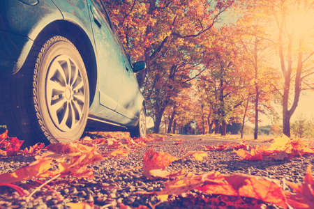 Car on asphalt road on autumnr day at park