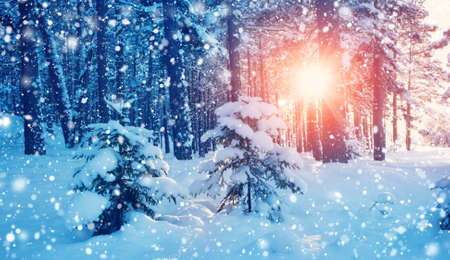 Beautiful tree in winter landscape in late evening in snowfall Stock Photo