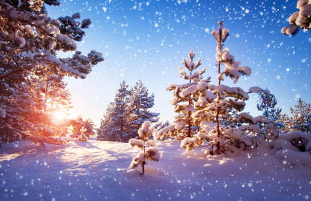 snowfalls: Beautiful tree in winter landscape in late evening in snowfall Stock Photo