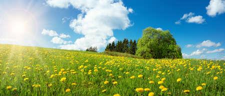 Sun flower: Feld mit Löwenzahn und blauer Himmel