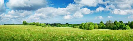 Terrain avec pissenlits et ciel bleu
