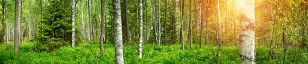松の森のパノラマ