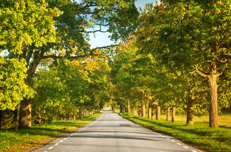 scenic drive: alley in autumn Stock Photo