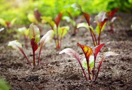 Nieuwe zaailingen in de tuin