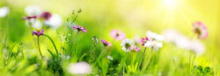 Veld met paardebloemen. Close-up van gele lente bloemen Stockfoto