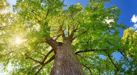 Fogliame di albero nella luce del mattino