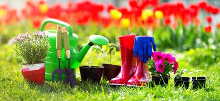 Bloem en plantaardige zaailingen groeien in de tuin