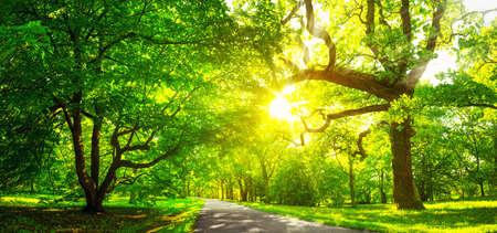 Rbol de follaje en la luz de la mañana Foto de archivo - 83229848
