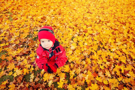 cute child sitting on the lawn covered with yellow leaves