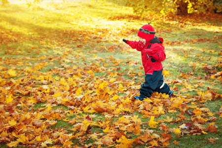 cute child running on the lawn covered with yellow leaves Stock Photo