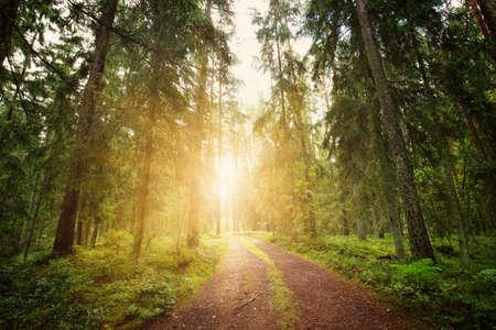 Lahemaa national park forest panorama Standard-Bild