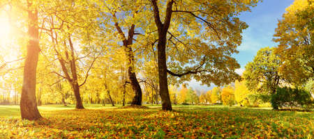 秋の野原の木々