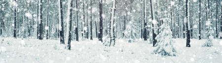 Kiefer bedeckt mit Schnee Standard-Bild - 88569592