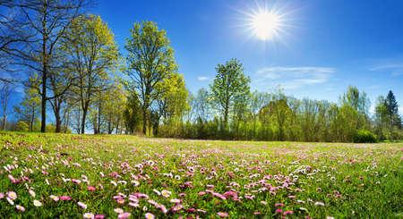 Hout met lentebloemen Stockfoto