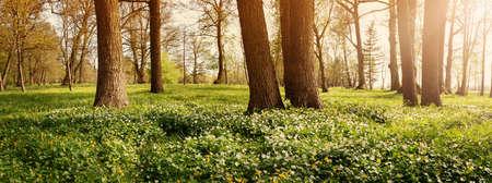 春の花を持つ木